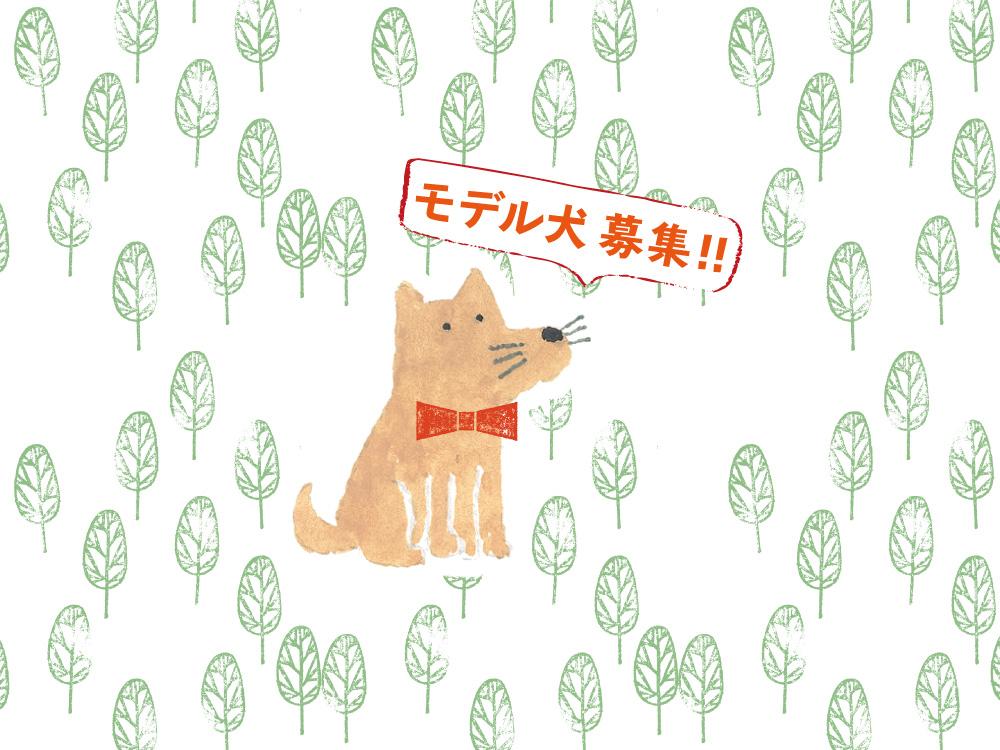 満員御礼!! 賀茂川100ワン!撮影会